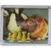 Obrazek szachowy - magnes, plastikowy ( A-42 )